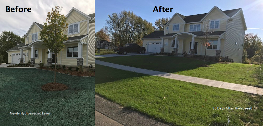 Lawn Care before and after pictures