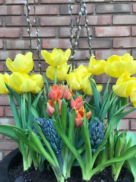 Spring Color Gallery
