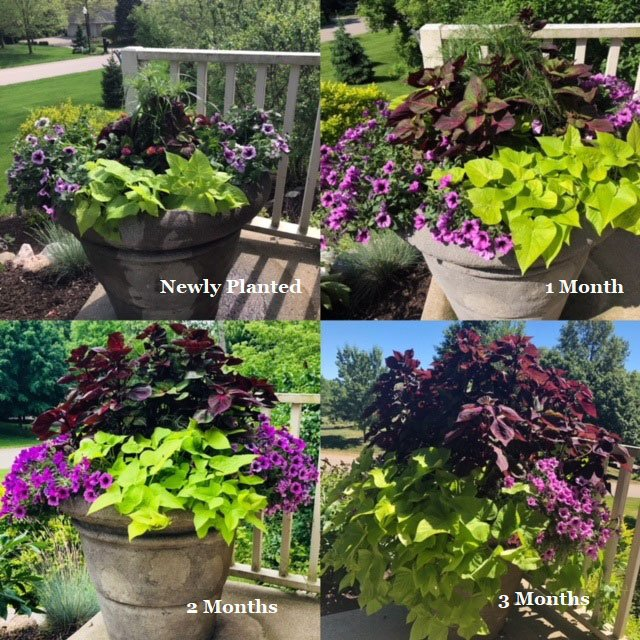 Example of Potted Plants Growing